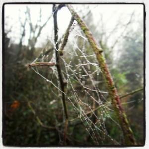 mist day 1